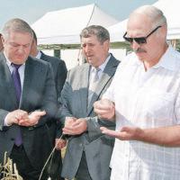 Александр Лукашенко прямо в поле дал ответ на вопрос: кто лучше работает с землёй. Фото: БЕЛТА