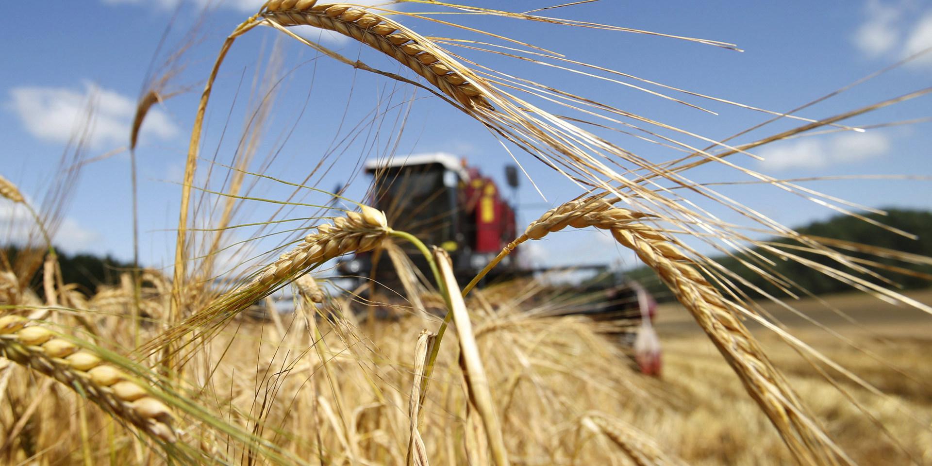 В Беларуси собрали больше 6 миллионов тон зерна